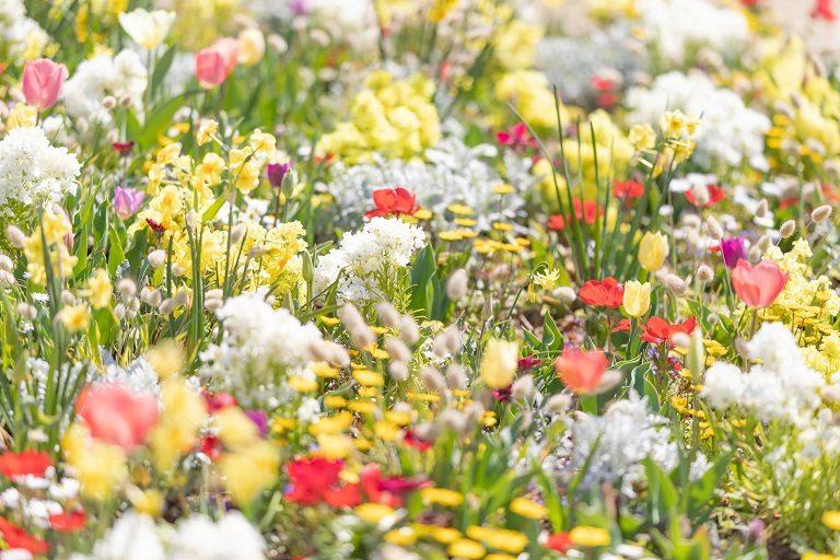 spring201943FTHG7175_TP_V2