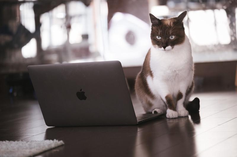 cat126IMGL6393_TP_V4